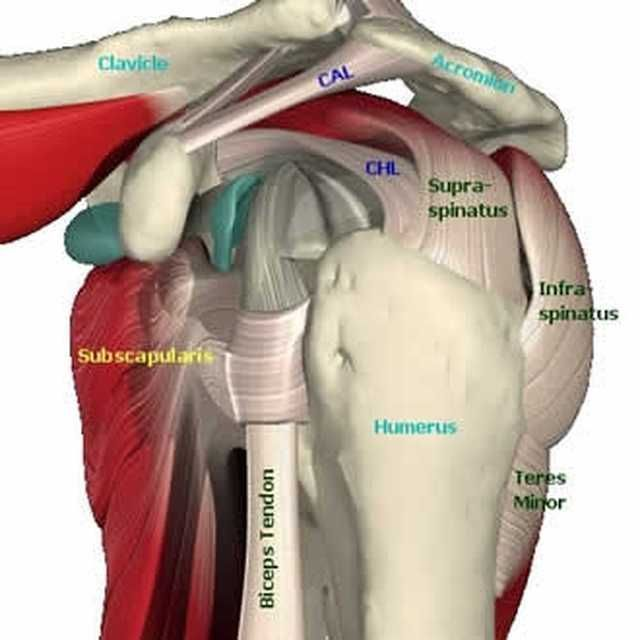 rotator cuff tear exercises