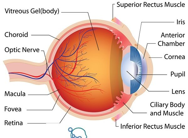 Common Eye Condition