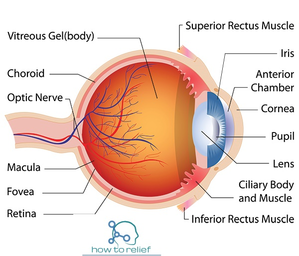 anatomy of the eye common eye condition treatment how. Black Bedroom Furniture Sets. Home Design Ideas