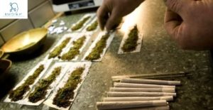Legalize Recreational Use of Cannabis in the US
