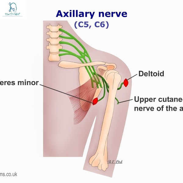 Axillary Nerve:Course,Motor,Sensory & Common Injuries » How To Relief