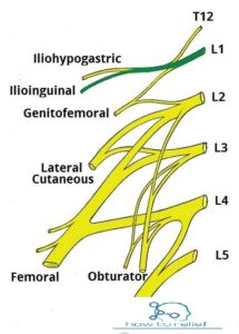The-Lumbar-Plexus