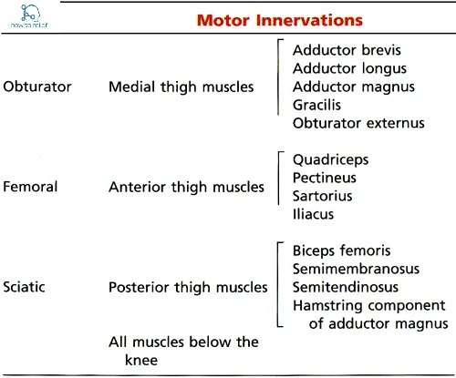 Sciatic Nerve:Course,Motor & Sensory Innervation » How To Relief