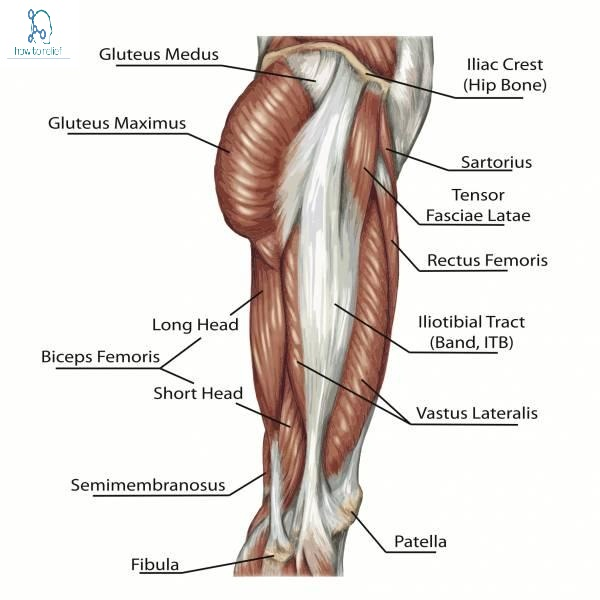 Mcqquestions Lower Limb With Answer P1 How To Relief