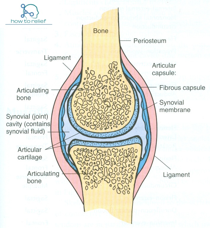 Synovial Jointclassification Definition Examples How To Relief