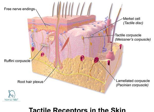 Tactile sensation