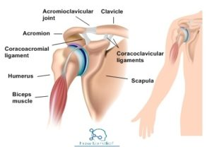 Synovial Joint Classification Definition Amp Examples 187 How