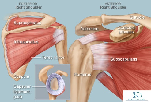 Mcqoulder Rotator Cuff Question With Answer P1 How To Relief