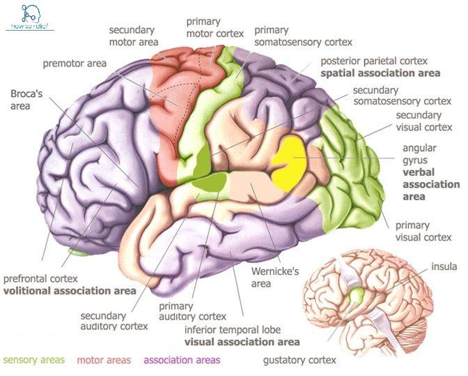 top neurologist in delhi