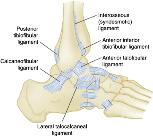 Ankle Joint:Anatomy,Movement & Muscle involvement » How To Relief