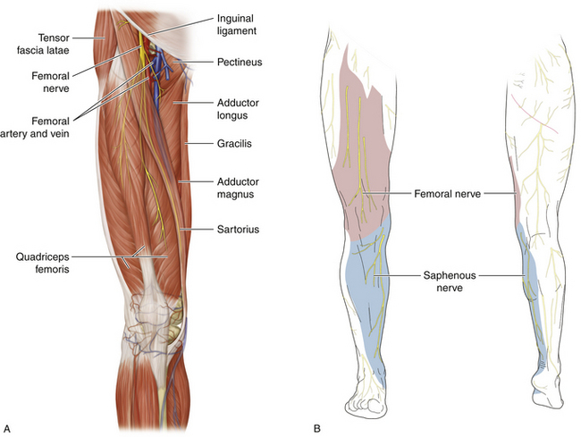 Femoral Nerve:Course,Motor & Sensory Innervation » How To Relief