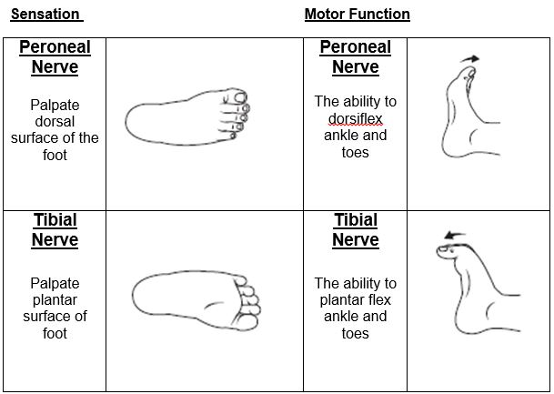 Tibial Nerve:Course,Motor & Sensory Innervation » How To Relief