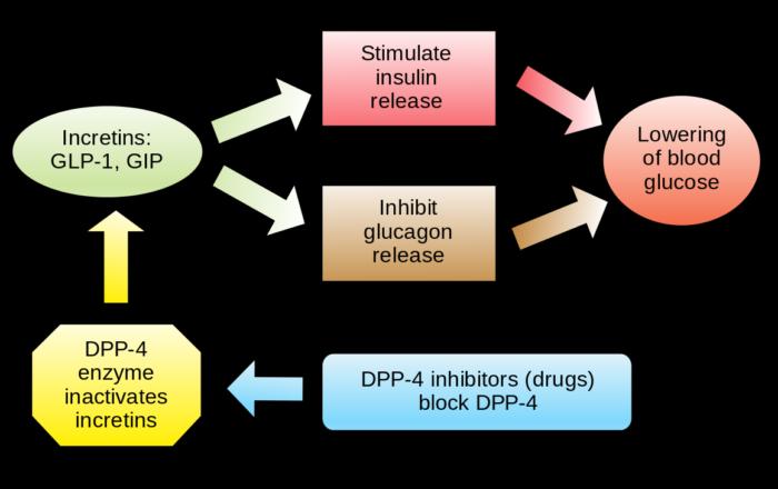 DPP_4_inhibitors