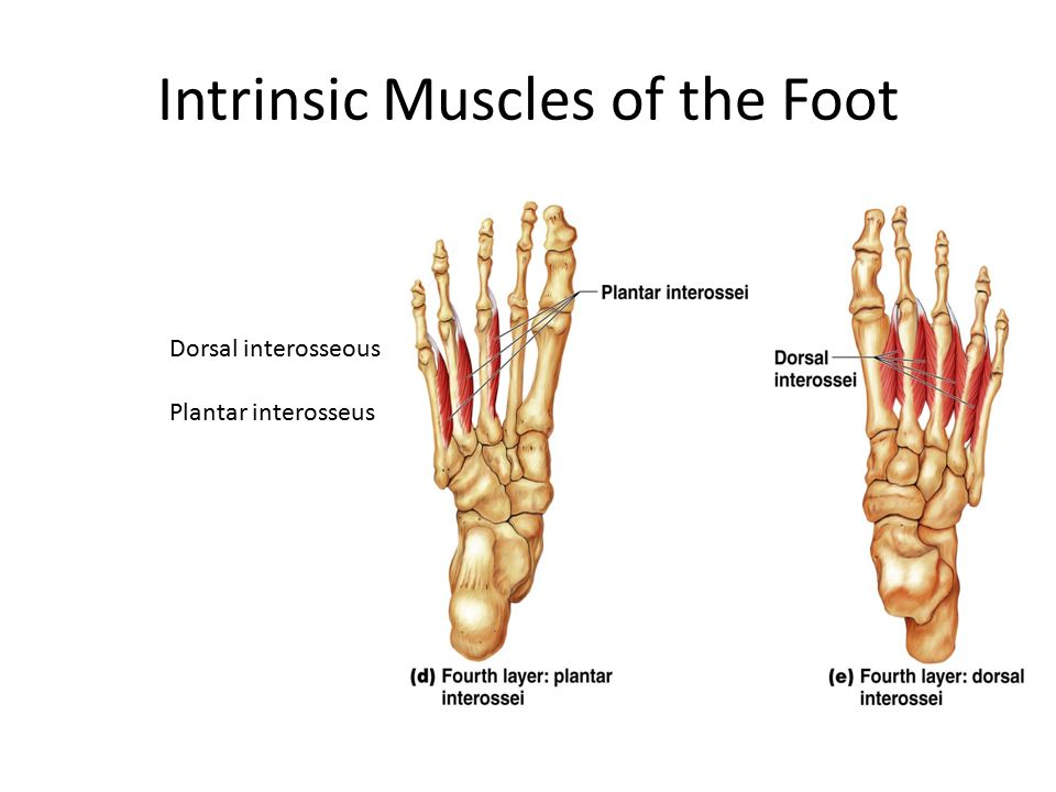 Dorsal interosseous of the foot