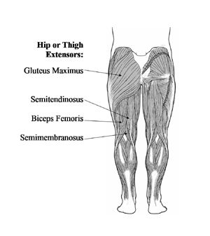 hip extension muscles